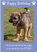 "Border Terrier-Happy Birthday - ""From The Dog"" Theme"
